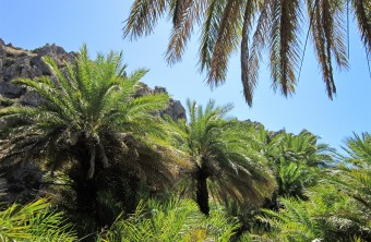Palm Forest walk in Preveli